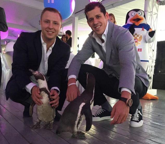 Malkin pingvin